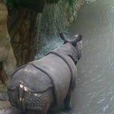 Dia no rinoceronte do jardim zoológico Imagem de Stock