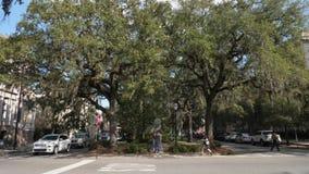 Dia que estabelece o tiro de Savannah Tree Lined Street video estoque