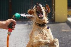 Dia quente com cão fotografia de stock royalty free