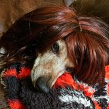 Dia ruim do cabelo Fotografia de Stock