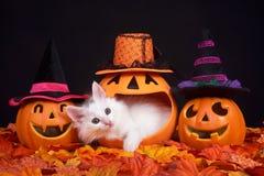 Dia una occhiata ad un gattino di Halloween di fischio Fotografia Stock Libera da Diritti