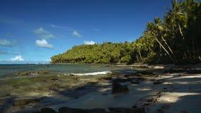 Dia van palmwortels op tropisch strand met wit zand, palmen stock footage