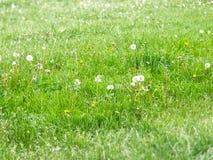 Dia verde Imagem de Stock Royalty Free
