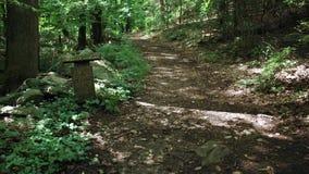 Diabeł meliny Conservancy park (3 7) zdjęcie wideo