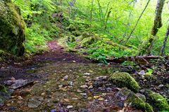 Stream on the Diablo Lake trail in North Cascades. Diablo Lake trail in North Cascades National Park, Washington Stock Photo