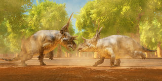 Diabloceratops Dinosaur Fight Royalty Free Stock Image