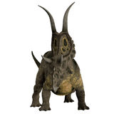 Diabloceratops Dinosaur Horns. Diabloceratops was a herbivorous dinosaur that lived in the Cretaceous Period of Utah, North America Royalty Free Stock Images