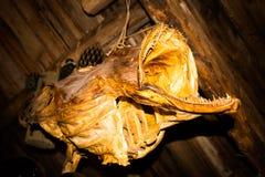 Diablos del mar Imágenes de archivo libres de regalías