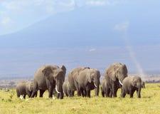 Diabo de poeira dos elefantes Fotografia de Stock