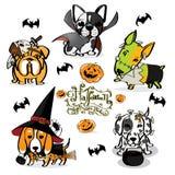 Diabo pequeno do cão pequeno de Dia das Bruxas Fotografia de Stock Royalty Free