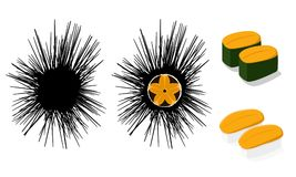 Diabrete cru e uni sushi isolados no branco, vetor ilustração do vetor