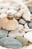 Diabrete de mar Imagens de Stock