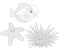 Diabrete, estrela do mar e peixes de mar Imagem de Stock