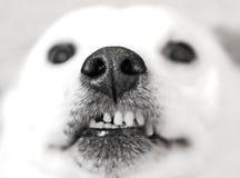 Diaci un bacio Fotografie Stock