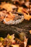 diadem Accesorios para la novia contra la perspectiva del tronco de árbol y del follaje del otoño ilustraciones Boda del otoño Foto de archivo libre de regalías
