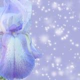 Diafragma de la lila Fotos de archivo
