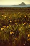 Diafragma salvaje en prado floreciente en la costa costa Foto de archivo