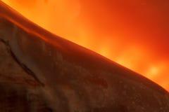 Diagonaal fragment van een kroonslak op een oranje achtergrond Stock Afbeeldingen
