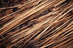Diagonaal oud droog gras Stock Fotografie
