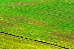 Diagonais verdes do campo Foto de Stock