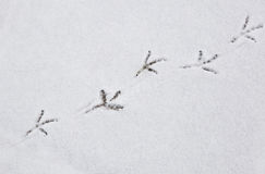 Diagonal bird footprints Stock Photos