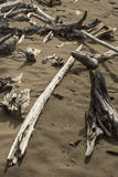 Diagonal, bleached driftwood log on sandy beach of Flagstaff Lak Royalty Free Stock Image