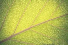 Diagonal da haste da folha, fundo verde da folha do vintage Imagens de Stock