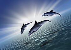 Diagonal de três golfinhos Fotos de Stock