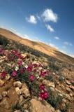 Diagonal Desert. Life signs in the desert Royalty Free Stock Photos