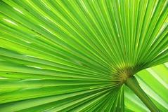Diagonal em folha de palmeira foto de stock
