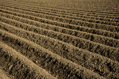 Diagonal field furrows Royalty Free Stock Images