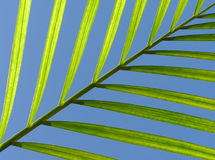 Diagonal leaf Stock Photography