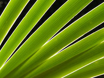 Diagonal leaves. Detailed shot of leaves crossing the image - backlighted stock photo