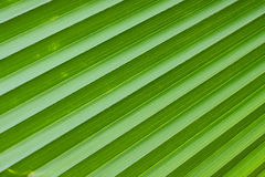 Diagonal lines of green palm leaf. Royalty Free Stock Image
