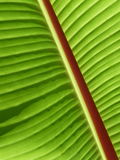 Diagonal Palm Frond Stock Photography