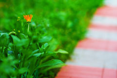 Diagonal path with left aligned orange flower background Royalty Free Stock Images