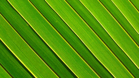 Diagonal Pattern. Shot of a green palm leaf stock images