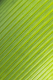 Diagonal pattern of palm leaf Stock Photography