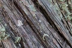 Diagonal wood texture. Diagonal texture of wood with musk and lichen Stock Photo