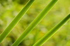 Diagonala vasser på gräsplan Arkivbild