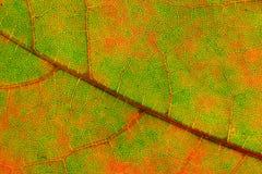 Diagonale abstracte de herfstachtergrond. Royalty-vrije Stock Afbeeldingen