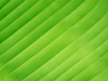 Diagonale della foglia della banana Immagini Stock Libere da Diritti