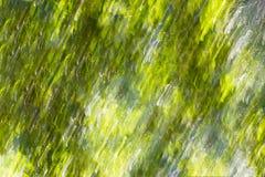 Diagonale het onduidelijke beeldachtergrond van de de zomer groene motie Stock Foto