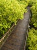 Diagonale houten weg Stock Foto's