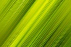 Diagonale palmbladachtergrond Royalty-vrije Stock Foto