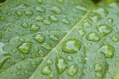 Diagonale Perspektive der Nahaufnahme von Tautropfen auf einem vibrierenden grünen Blatt Lizenzfreie Stockbilder