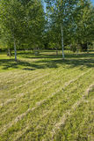 Diagonales de gauche à droite d'herbe équilibrée de pelouse photographie stock