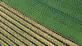 diagonalt fält Fotografering för Bildbyråer