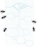 Diagram of ants. A diagram on grid paper with ants vector illustration