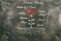 Diagram av naturen på kritabräde Royaltyfri Fotografi